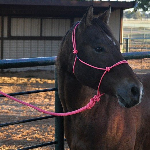 Charity Rope Halter / Knotenhalfter